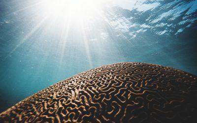 The ADHD Algorithm Part 2: Understanding the Algorithm